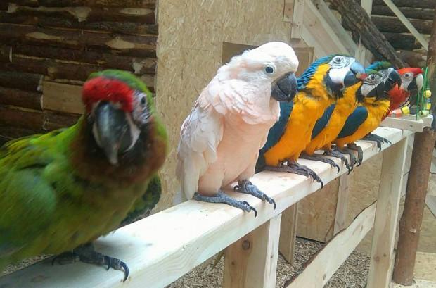 W Papugarni możemy zobacz pond 50 kolorowych ptaków.