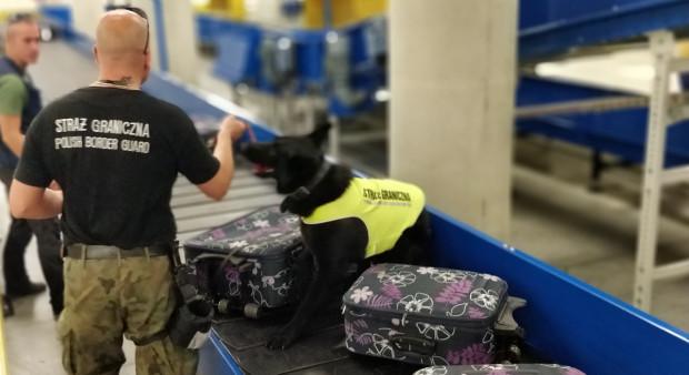 Od początku tego roku funkcjonariusze z SG zatrzymali podczas odprawy granicznej na lotnisku aż 231 osób.