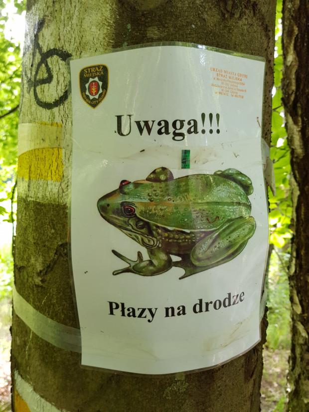 Komunikat ostrzegający przed płazami w pobliżu ich obszaru lęgowego.