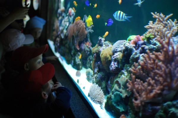 Akwarium Gdyńskie to miejsce dla każdego - i dla dużych, i dla małych.