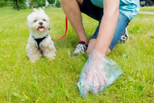 Psie odchody ulegają biodegradacji nieporównywalnie szybciej niż foliowy worek, w którym je wyrzucamy. Jak do tego ma się ekologia i walka z nadmiernym zużyciem plastiku?