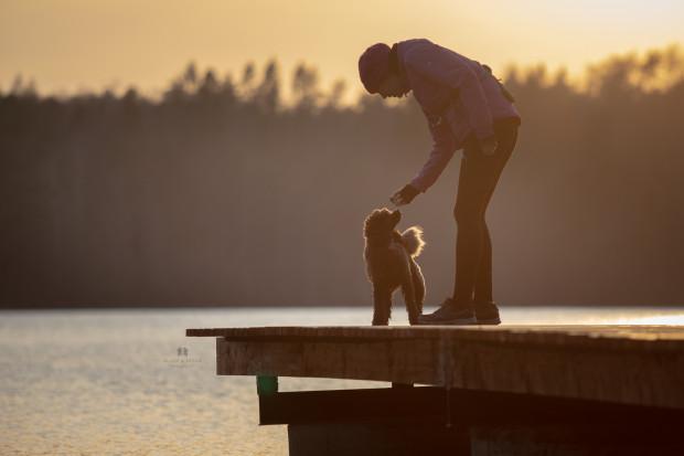 Psy to zwierzęta socjalne i towarzyskie. Jeśli zaufają człowiekowi, staje się on ich najlepszym przyjacielem.
