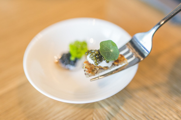 Nasturcja to popularna ozdoba na talerzach. Tutaj w daniu w sopockiej 1911 Restaurant.
