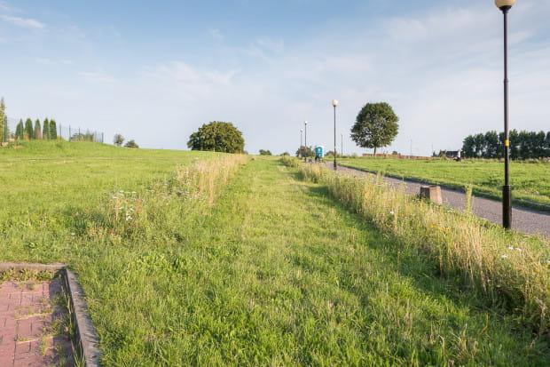 Łąka z siewu - rejon Opływu Motławy.