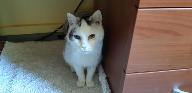 Kotka Bazylia mieszka w gdańskim ZTM-ie od kwietnia.