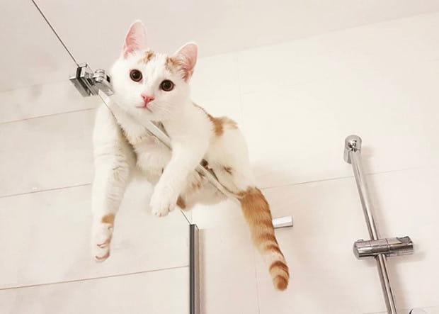 Koty bardzo lubią wypoczywać w nietypowych miejscach. Zwłaszcza wtedy, gdy jego człowiek bierze prysznic.