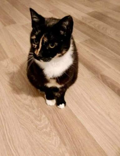 Kotka Armani wraca do właściciela po niemal półrocznej rozłące.