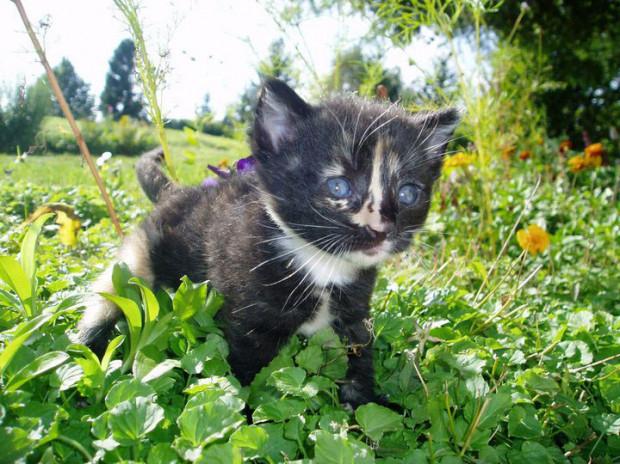 Kotka Armani wraca do właściciela po niemal półrocznej rozłące. Tak wyglądała, kiedy była malutka.