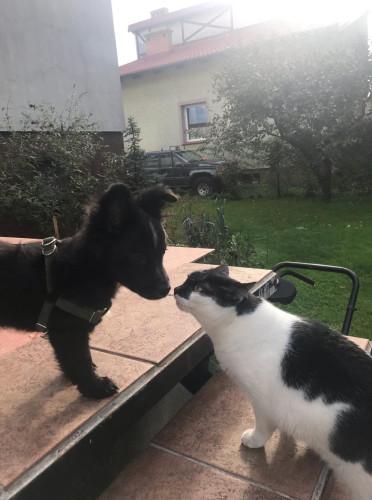 Kto rządzi w domu? Pies czy kot?