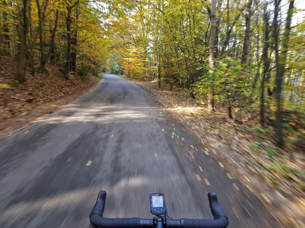 Fragment asfaltowej ścieżki w lesie