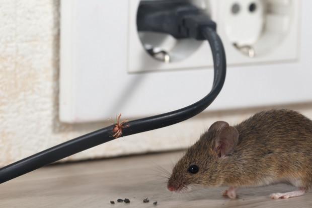 Myszy i szczury do naszych piwnic będą próbowały dostać się każdym małym otworem, o ile nie zostanie on przez nas zabezpieczony.