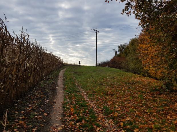 Nieduży podjazd na trasie polną ścieżką przy polu kukurydzy