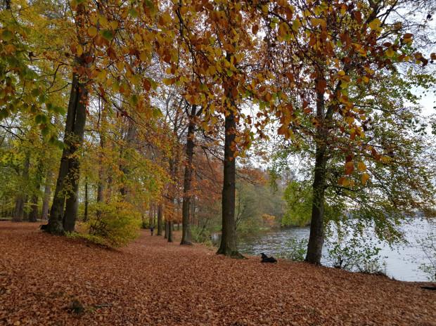 Jezioro Łapińskie - widok z trasy