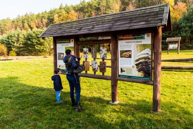 Leśny Ogród Botaniczny Marszewo to prawdziwa skarbnica wiedzy botanicznej dla dużych i małych.