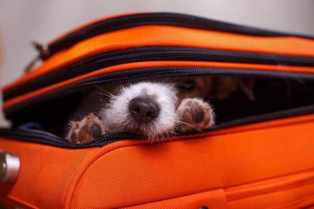 Z psem do hotelu w Sopocie? To coraz szerzej dostępna opcja.