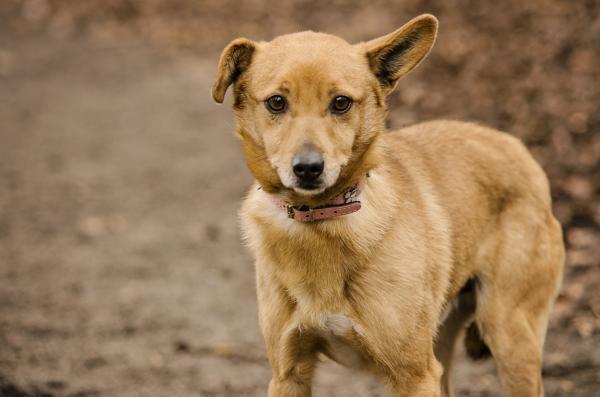 W schroniskach wciąż czeka wiele psów i kotów, które potrzebują naszej pomocy.