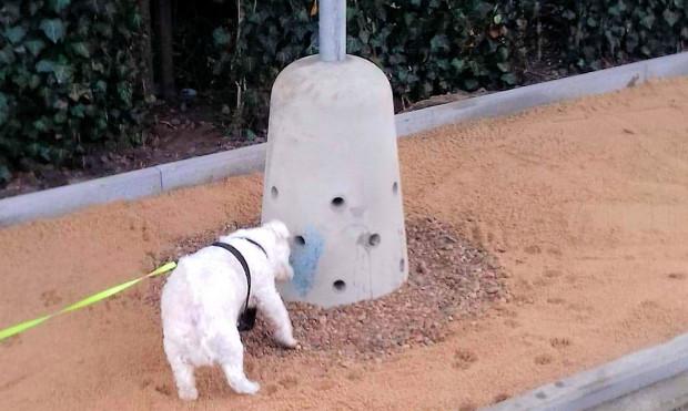 Specjalna konstrukcja piesuaru ma przyciągać psy. Nz. Gutek obwąchujący nowe urządzenie.