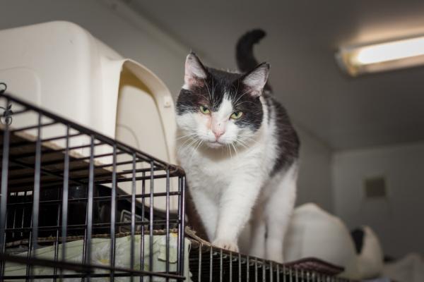 """Lubczyk ma ok. siedmiu lat i jest kotem, który ceni sobie swoje terytorium i przestrzeń. Ale to tylko jedna z """"twarzy"""" kocurka. W schronisku czeka na dom od 2016 roku."""