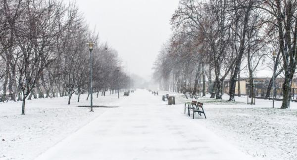 Tak wyglądała aleja topolowa w Gdyni 16 stycznia 2018 roku.