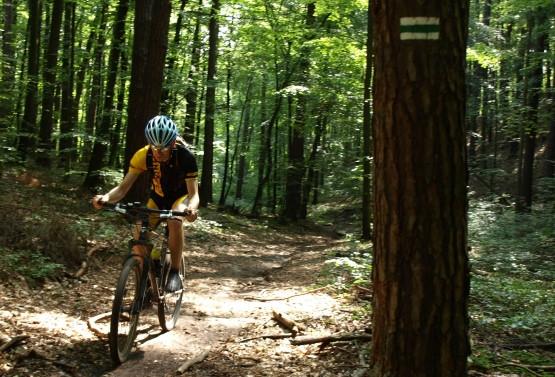 Oznakowany kolorem zielonym, pieszy szlak Skarszewski wiedzie przez Trójmiejski Park Krajobrazowy na ponad 20 km.
