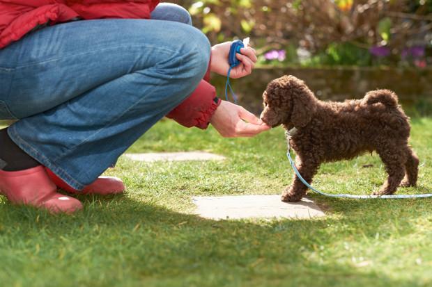 Szkolenie psów w Trójmieście - gdzie, jak często i za ile?