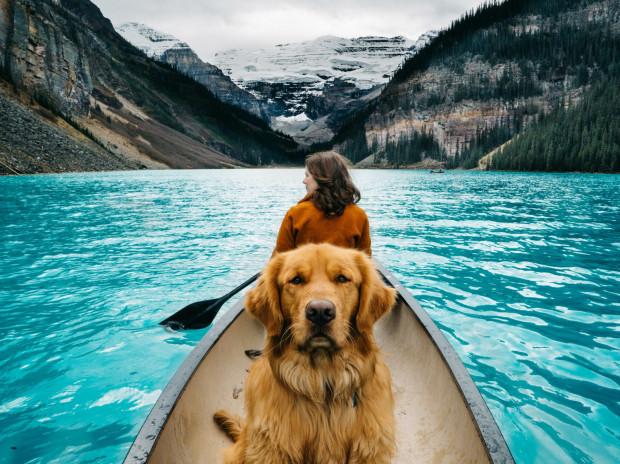 Podróże z psem lub kotem z roku na rok zyskują na popularności.
