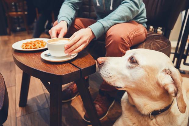 Zwierzęta przez cały rok czekają na kochający dom. Może dla niektórych z nich to właśnie walentynki okażą się najszczęśliwszym dniem w życiu?