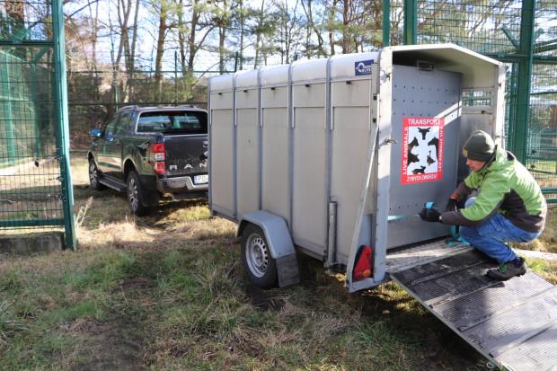 Aramis pojechał do Niemiec w specjalnym transporterze.
