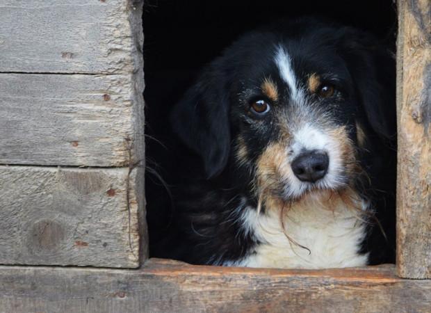 Dziki jest już starszym psem, który wiele w życiu przeszedł, jego życie zmieniło się dwa lata temu, kiedy to dostał nową szansę i nowe życie, lecz do pełni szczęścia brakuje mu jednego - wspaniałego, wyrozumiałego i spokojnego domu.