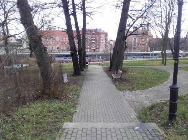 Oczyszczone drzewa po interwencji pracowników GZDiZ.
