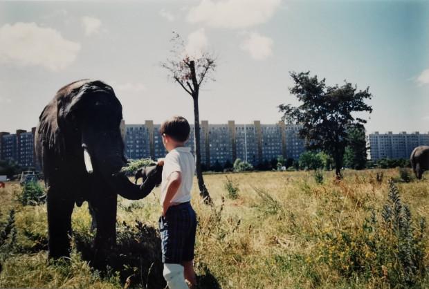 """""""Słonie spacerowały między, wtedy jeszcze niewysokimi drzewami i szczególnie upodobały sobie podjadanie listków i gałązek z drzew podobnych do akacji. Można było sobie do nich swobodnie podejść i zrobić zdjęcie. Zwierzaki w ogóle się nie płoszyły, były przyjaźnie nastawione."""""""