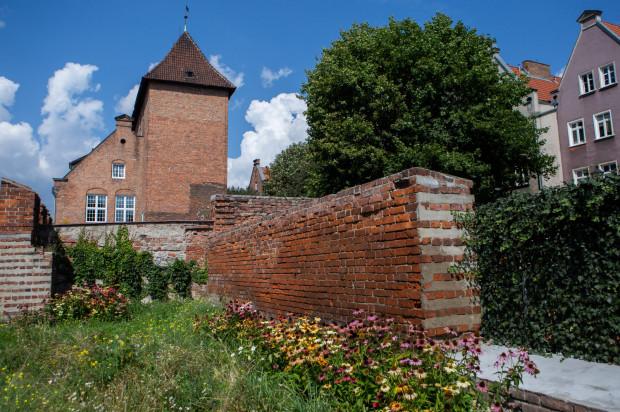 Łąka w centrum miasta w ubiegłym roku na rogu ul. Zbytki i Za Murami.