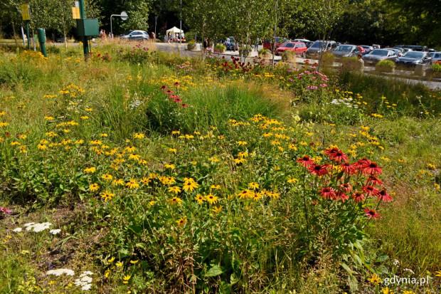 Zgodnie z rekomendacją Wydziału Ogrodnika Miejskiego koszenie trawników w Gdyni zostało wstrzymane.