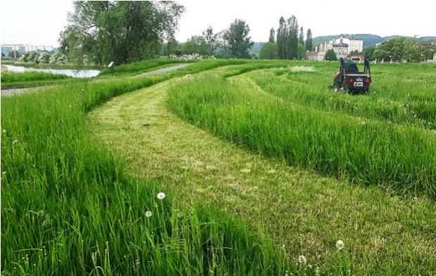 Koszenie traw jest niewskazane w czasie suszy. Dlatego w Gdańsku i Gdyni w niektórych miejscach zaprzestano koszenia, w innych ograniczono je do minimum.