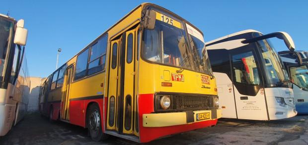 Przegubowy autobus Ikarus pojedzie trasą z 1981 roku.