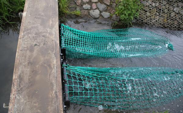 Gdańskie Wody zapewniają, że rybom, które zaplątają się w sieci, nic nie grozi.