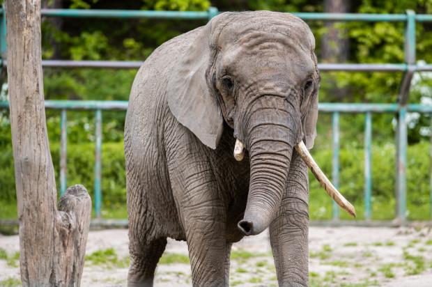 """Wielki powrót do ZOO. Mimo chłodu w sobotę ogród zoologiczny zwiedzało wiele rodzin z dziećmi. Kolejek do kasy nie było, ponieważ bilety należało zamówić online. Dzięki temu do ogrodu zoologicznego wchodzi jednocześnie """"tylko"""" 500 osób."""