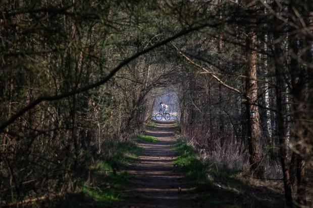 Nowa droga rowerowa będzie stanowić odcinek Międzynarodowego Szlaku R-10. Na zdjęciu leśna ścieżka w Świbnie.
