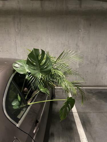 Niektóre rośliny jadą do Całego Gawła tak...