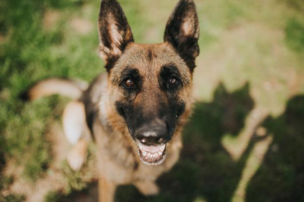 Po pewnym czasie okazało się, że Julka jest psem idealnym - grzeczna, uwielbiająca obecność człowieka, świetnie dogaduje się z innymi psami.
