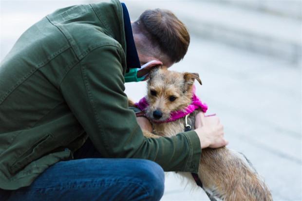 Jeden z psów czekających na adopcję w schronisku w Sopocie.