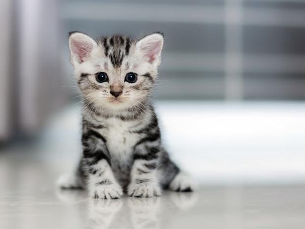 Trójmiejskie fundacje zajmujące się pomocą bezdomnym kotom pękają w szwach.