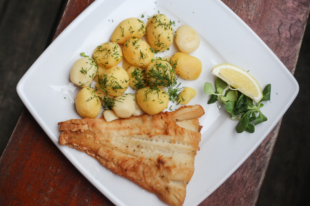 Filet z halibuta z patelni z ziemniakami i zestawem surówek.