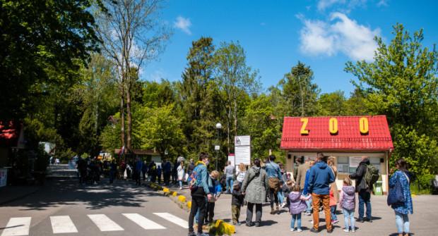 Obecnie z Gdyni do zoo można dostać się SKM albo samochodem, czy motocyklem. Dla wysportowanych pozostaje opcja rowerowa.