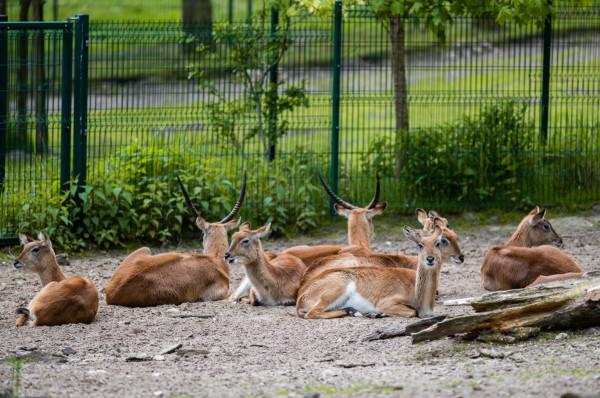 Zoo powiększy się m.in. o nową całoroczną strefę gastronomiczną czy taras widokowy.