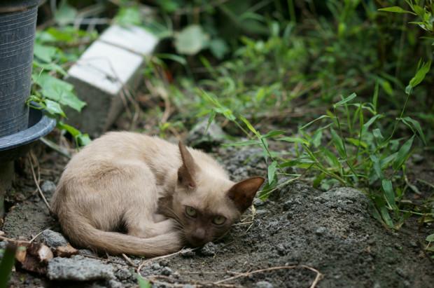 Pożywienie dla kotów odbierać mogą społeczni opiekunowie kotów wolno bytujących, czyli osoby oficjalnie współpracujące w tym zakresie ze schroniskiem dla bezdomnych zwierząt Promyk w Gdańsku. Odbierając karmę, należy mieć przy sobie legitymację społecznego opiekuna kotów. Karma przeznaczona jest dla kotów bytujących na terenie Nowego Portu oraz Przeróbki.