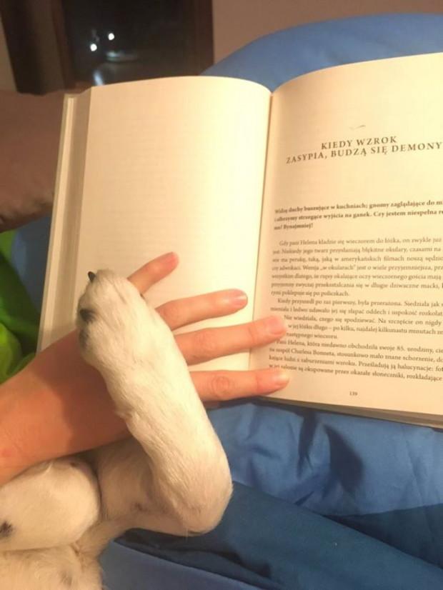 Światowy Dzień Psa to inicjatywa polska, obchodzona od 2007 roku.