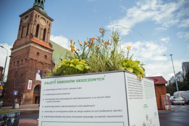 Wpłynęło 147 projektów do Zielonego Budżetu Obywatelskiego, w ramach którego mogą powstać np. nowe ogrody deszczowe w mieście.