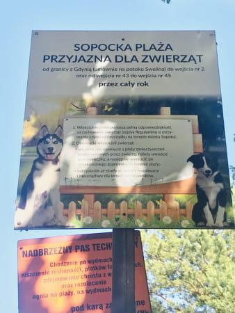 Dostępność plaż dla psów w Trójmieście wciąż rodzi kontrowersje, zwłaszcza w sezonie letnim.