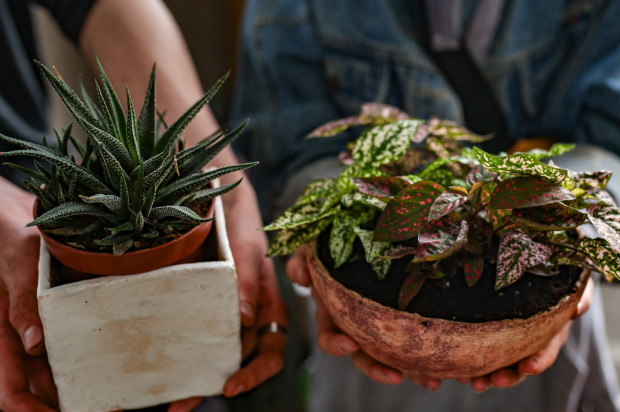 Ci, którzy kochają rośliny, mogą przyjść 25 lipca na sąsiedzką wymianę roślin przy Gdyńskim Centrum Filmowym.